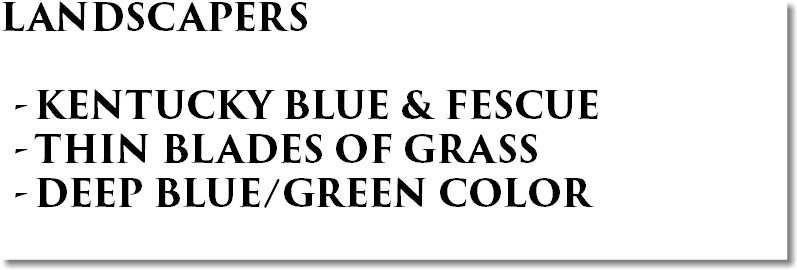 LANDSCAPERS KENTUCKY BLUE & FESCUE THIN BLADES OF GRASS DEEP BLUE/GREEN COLOR